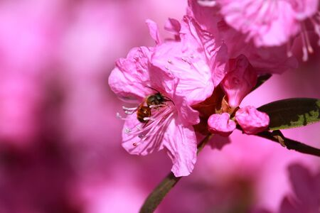 Insect on the flower