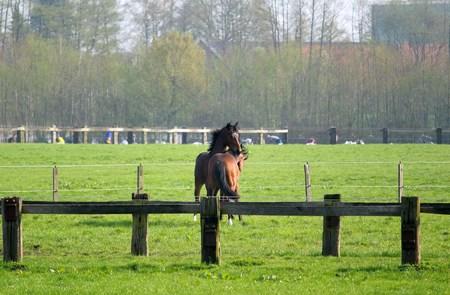 horses fight Stock Photo