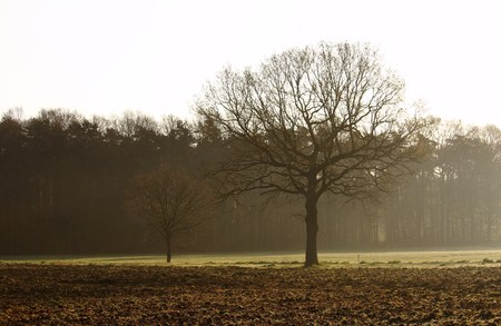 Tree in the countryside