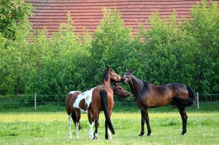 Three horses in the pasture