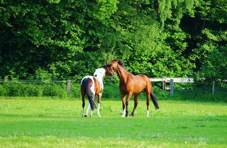 Horses sniff each other