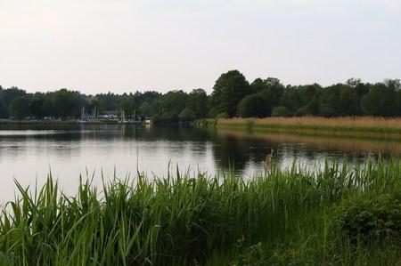 Reed on the shore Reklamní fotografie