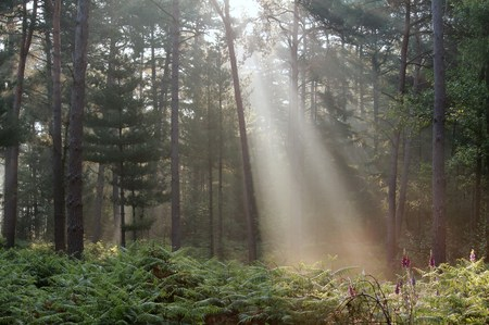 Sunbeam in the forest Reklamní fotografie