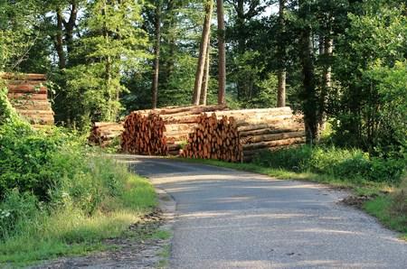 Tree trunks on the roadside