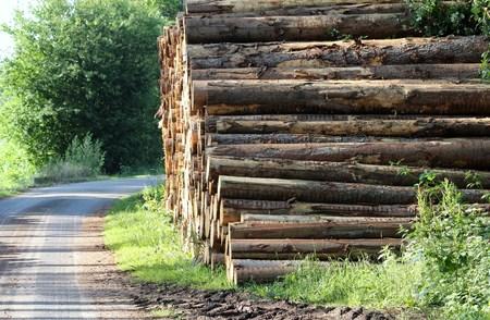 Tree trunks along the way