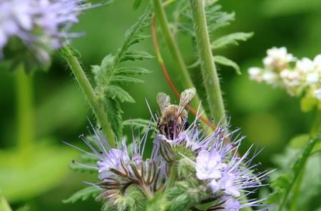 pollination Reklamní fotografie