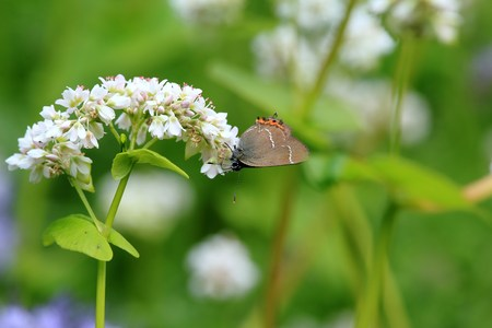 Butterfly at the flower