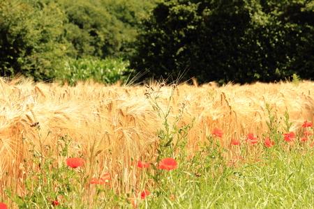 Wildflowers at the field Reklamní fotografie