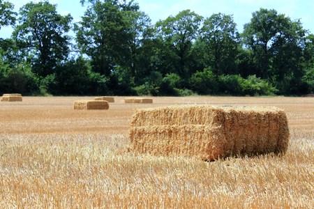 Straw bales on the stubble field Reklamní fotografie