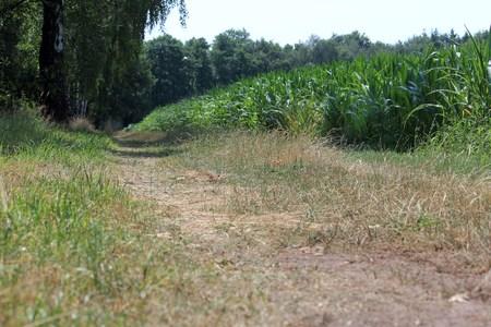 dry paths Reklamní fotografie