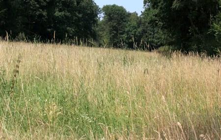 parched grass Reklamní fotografie