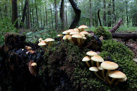 Mushrooms on the tree trunk