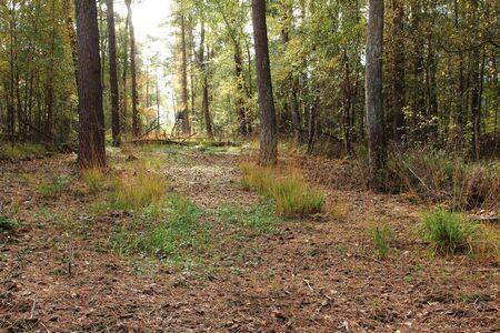 Forest road in NRW Archivio Fotografico - 133354879