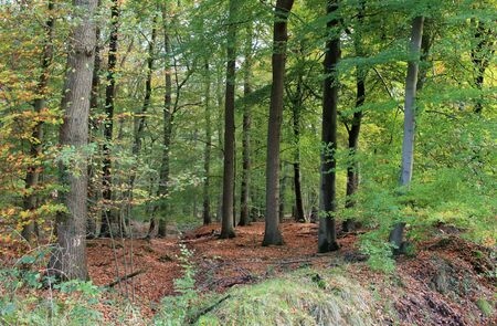 The natural forest Stockfoto