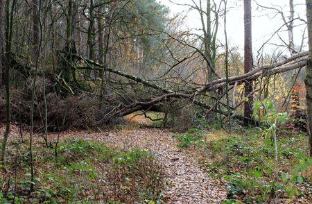 Fallen trees block the way 版權商用圖片 - 137841158