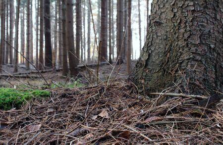Our beautiful fir forest