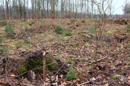 La forêt est boisée