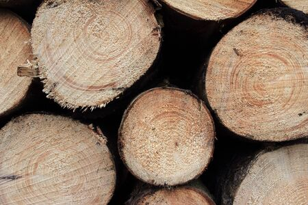Accumulation of tree trunks Reklamní fotografie