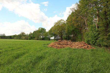 Dung heap in the grass Standard-Bild