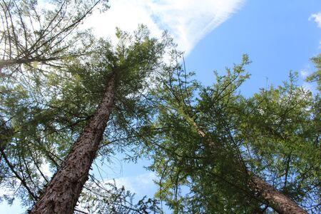 Treetop in the sky