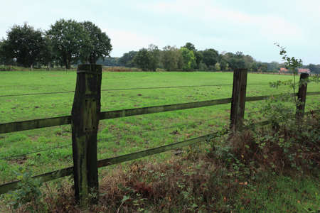 Fence on the meadow