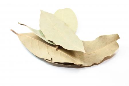 dafne: foglie secche daphne