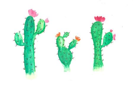 watercolor cactus flowers