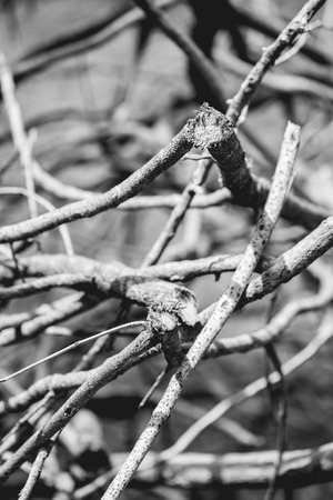 leafless: Abstract leafless tree branches on BW.