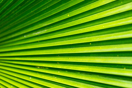 green leafs: Lines and textures of Green leafs background. Stock Photo