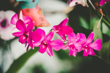 orchidea: Purple orchids under the sunlight,vintage fillter.