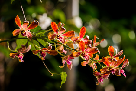 orchidea: Purple orchids under the sunlight.