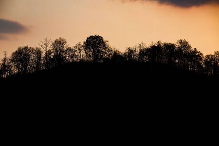 flathead: Silhouettes of trees and mountain on bautiful sunset