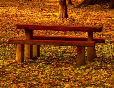 Beautiful colors of autumn landscape with bench photo