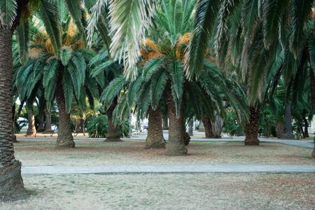par with beautiful palm trees Stock Photo - 17154945