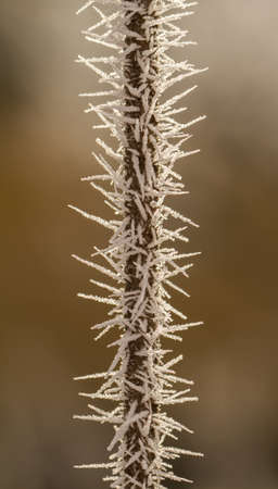 hoarfrost on a thin branch Stock Photo - 17154901