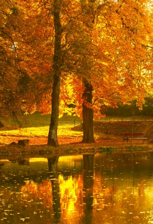 Beautiful colors of autumn landscape by the lake photo
