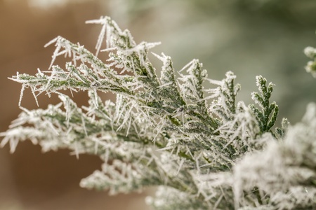 white hoarfrost crystal on green thuja twig Stock Photo - 19489753