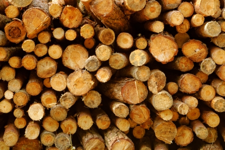 Pile of chopped fire wood prepared for winter Stock Photo - 19746238