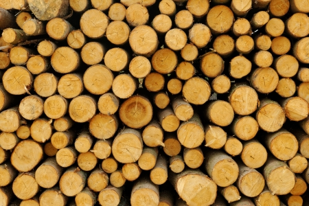 Pile of chopped fire wood prepared for winter Stock Photo