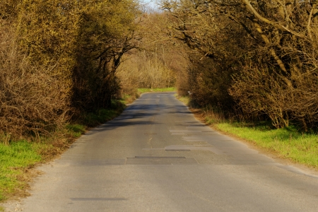asphalt road into the forest