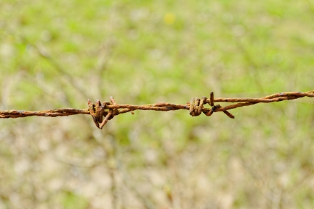barbed Wire fence in front of the green meadow photo