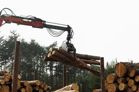 timber harvesting: The harvester working in a forest.