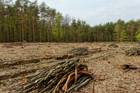 industrial deforestation and logging Stock Photo - 20105793