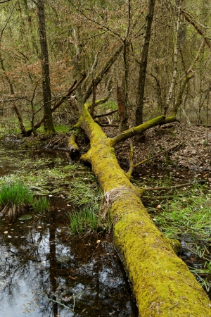 fallen tree with moss by the lake Stock Photo