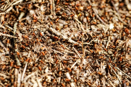 ants and ant hill Stock Photo