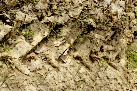 tractor tire tracks in the mud Stock Photo - 20563152