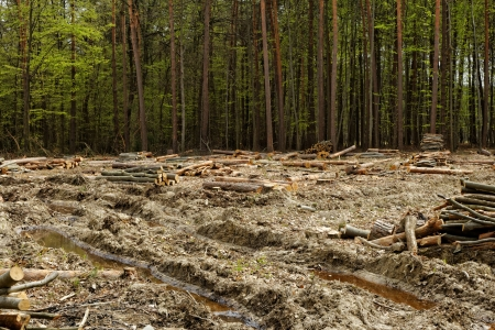 industrial deforestation and logging photo