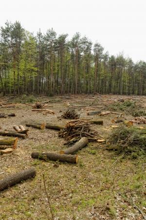 deforestacion: la deforestaci?n y la tala industrial Foto de archivo