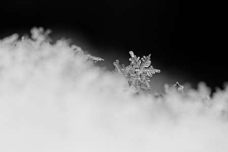 beauty white snowflake crystals on dark background photo