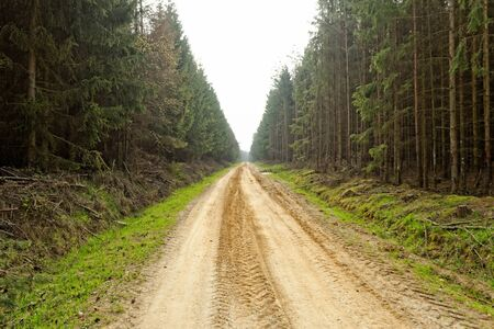 dirt road in the forest photo